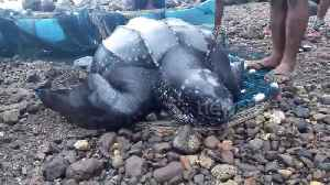 Indonesian villagers rescue turtle trapped in fishing net [Video]