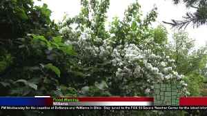 Summer marks the return of insects, potential plant damage [Video]