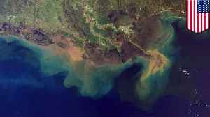 Gulf of Mexico's 'dead zone' may be largest in history [Video]