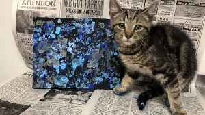 Paw-casso! Cute Pics Show Kittens Painting To Help Them Find A New Home [Video]