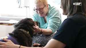 Creature Comfort Pet Therapy Dogs Visit Cancer Patients [Video]