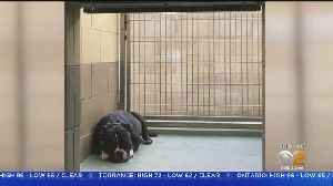 Dog Left In Hot Car While Owner Was In Riverside Courtroom [Video]