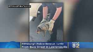 Pittsburgh Police Rescue Turtle From Busy Street In Lawrenceville [Video]