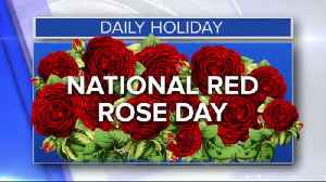 Daily Holiday - National red rose day [Video]