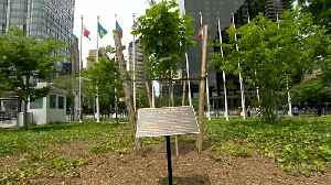 Watch: Anne Frank tree planted at UN headquarters [Video]