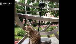 Adorable kitten goes sightseeing in London [Video]