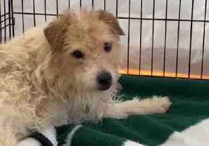 Almost 200 Dogs Rescued From 'Squalor' at New Jersey Property [Video]