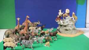 Move Over Disney! Ingenious Disney Fan Recreates 'the Circle Of Life From The Lion King Using Just Toys [Video]