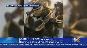 Baby Ducks Rescued From Sewer In Griffith, Indiana [Video]