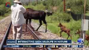 Reminders about interacting with Colorado wildlife [Video]