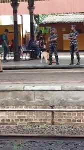 Drug Sniffing Dog Playfully Runs Around Train Station