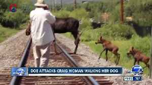 CPW: Elderly woman seriously injured after surprised mother mule deer attacks her [Video]