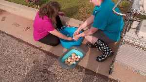 Students with Special Needs Learning Life Lessons by Caring for Chickens, Selling Eggs [Video]