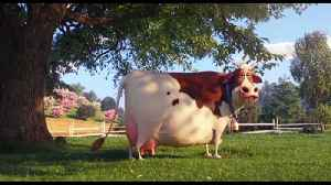 The Secret Life of Pets 2 Movie Clip - Duke is Taunted by a Cow [Video]