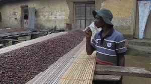 Ivory Coast and Ghana suspend sales of cocoa [Video]