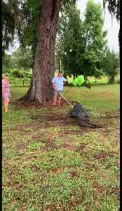 Florida couples uses pet alligator for gender reveal party [Video]