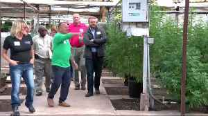 Forget soybeans, U.S. farmers rush to plant hemp [Video]