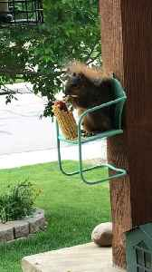 Squirrel Sits for a Snack [Video]