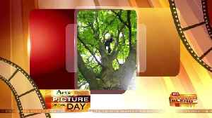 Art's Camera Plus Picture of the Day for June 14! [Video]