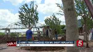 Cherry trees replanted in downtown Nashville [Video]
