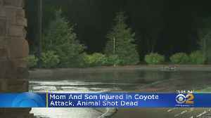 Coyote Killed After Attacking Mother, Child [Video]