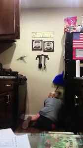 Family Pranks Mom with Giant Fake Bug in Cupboard [Video]