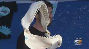 Traveling Exhibit 'Shark Shack' Tells Swimmers How To Stay Safe [Video]