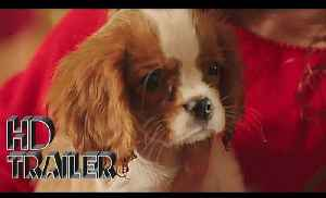Project Puppies for Christmas Movie [Video]