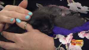 News video: June is Adopt-a-Shelter-Cat Month
