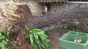 Storm Uproots Massive Tree In Arlington, Damage Widespread In Tarrant County [Video]