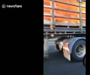 Chickens cling to truck going 100 kph after falling out crate on Melbourne highway [Video]