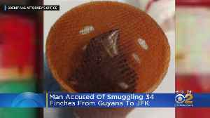 Man Accused Of Smuggling 34 Finches From Guyana To JFK [Video]