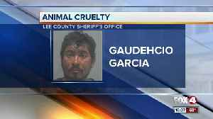 Man accused of kicking his dog in Fort Myers [Video]