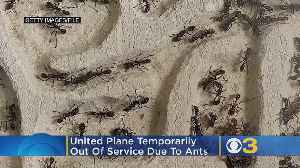 Ants Spill Out From Carry-On Bag, Forces United Plane Out Of Service At Newark Airport [Video]