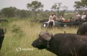 The big business of South Africa's game farms [Video]