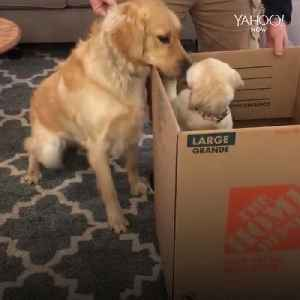 This dog is so excited to meet his little sister [Video]