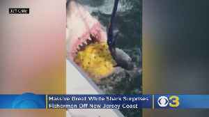 WATCH: Incredible Video Of Massive Great White Shark Off New Jersey Coast [Video]