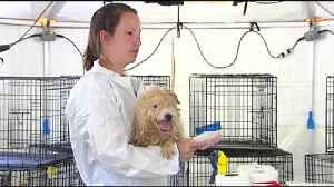 Well-known dog breeders charged in NJ animal cruelty case [Video]