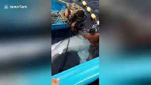 Indonesian fishermen rescue and release whale shark that was entangled in their net [Video]