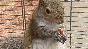Man gave meth to 'attack squirrel' [Video]
