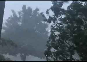 Trees Sway in Powerful Winds Brought by Kansas Storms [Video]