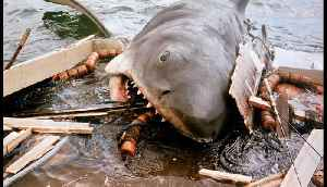 The Matawan Man-Eater | The Inspiration for the Film Jaws [Video]