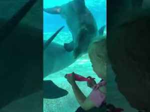 Dolphins at an Oceanarium Look Intrigued by Little Girl's Dolphin Toy [Video]