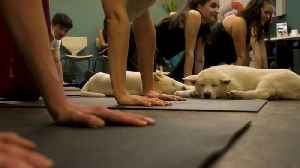 Pets Yoga relaxes participants and animals alike [Video]