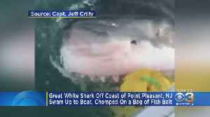 Watch: Great White Shark Swims Up To Boat, Chomps On Bag Of Fish Off New Jersey Coast [Video]