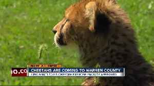 Cincinnati Zoo cheetahs to get new play area in Warren County [Video]