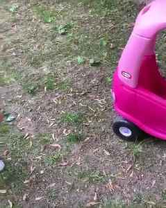 Dramatic Toddler Yells at Fly Sitting on Toy Car to Go Away [Video]