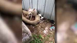Animals Rescued from Home Where Dead Puppies Were Also Found [Video]