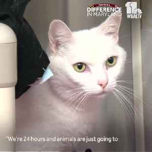 BARCS seeks your help amid overflow of cats [Video]