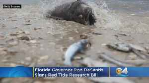 Florida Governor Ron DeSantis Signs Red Tide Research Bill [Video]